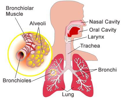 how to make your lungs stronger with asthma
